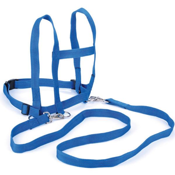 größenverstellbare Laufleine mit Sicherheitsverschluß in blau