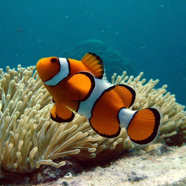 Korallenriff Gesellschaftsspiel für Kinder in Kindergarten und Schule