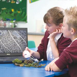 Kinder untersuchen Naturmaterialien mti dem digitalen Mikroskop